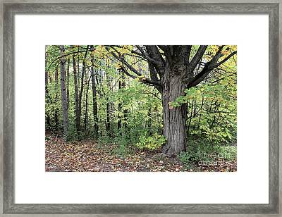 October Trees Framed Print