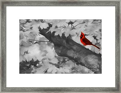 October Visitor Framed Print