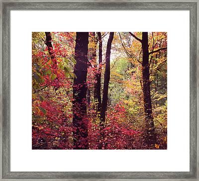 October Woodland Framed Print