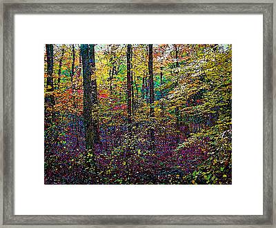 October Woods Framed Print