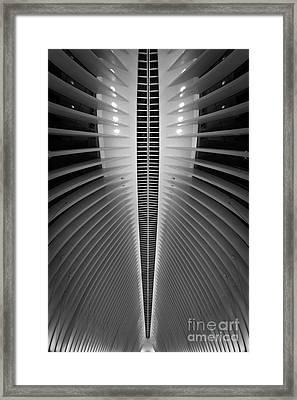 Oculus Spine  Framed Print