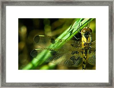 Odanate Wing Framed Print by Douglas Barnett