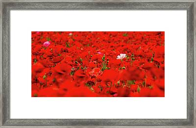 Odd One Out Framed Print by Jean Noren