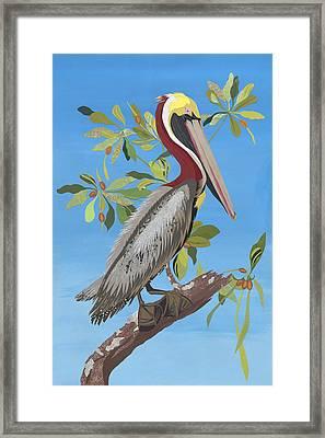 Ode To Audubon - Brown Pelican Framed Print
