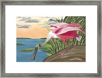 Ode To Audubon - Roseate Spoonbill Framed Print