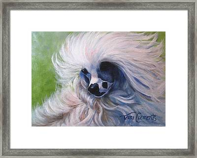 Odin In The Breeze Framed Print by Terri Clements