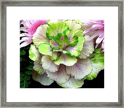 Of Cabbages And Pinks Framed Print by Mindy Newman