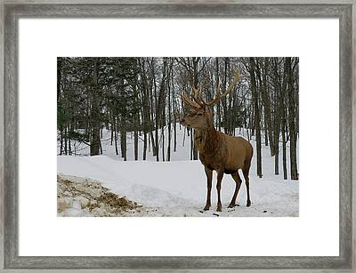 Of Course Framed Print