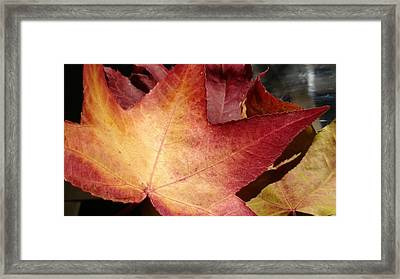 Of Fall Framed Print by Frederick Messner