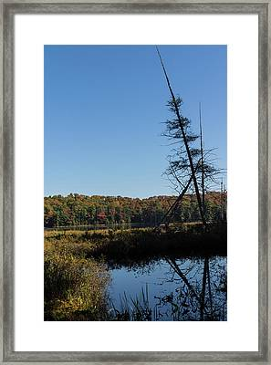 Of Tree Bones And Swamps -  Framed Print