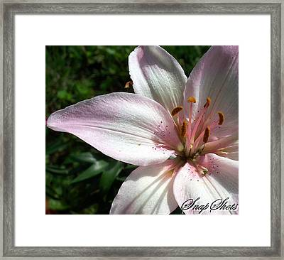 Off Center Pink Lily Framed Print by Emily Kelley