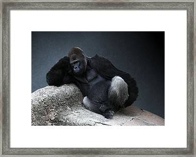Off Duty Gorilla Framed Print