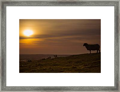 Off Home For The Night Framed Print