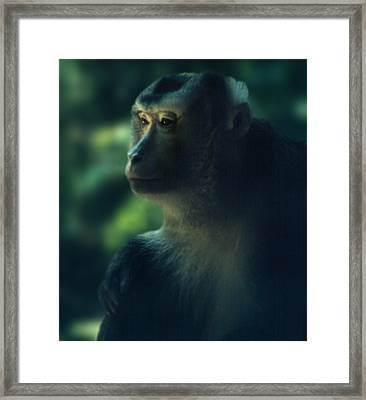 Off In Thought Framed Print
