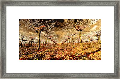 Off Of The Vine Framed Print
