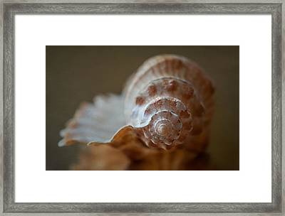 Off Shore Framed Print by Maggie Terlecki