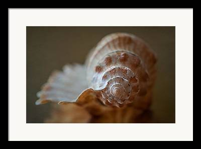 Shell Photographs Framed Prints