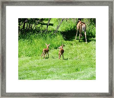 Off They Go Framed Print by Sandra Updyke