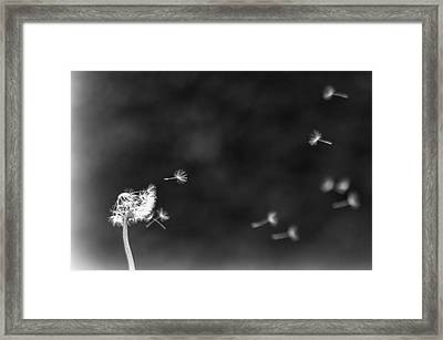 Off To Pastures New Framed Print