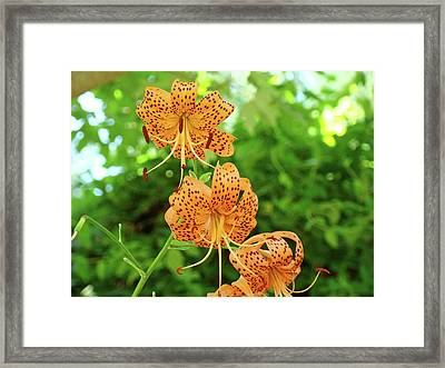 Office Art Prints Tiger Lilies Flowers Nature Giclee Prints Baslee Troutman Framed Print by Baslee Troutman