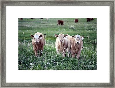 Framed Print featuring the photograph Offspring by Wilko Van de Kamp