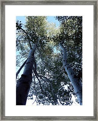 Oh Aspen Framed Print