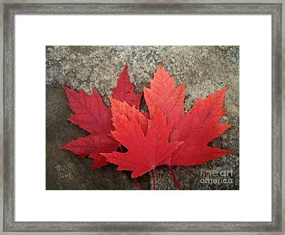 Oh Canada Framed Print