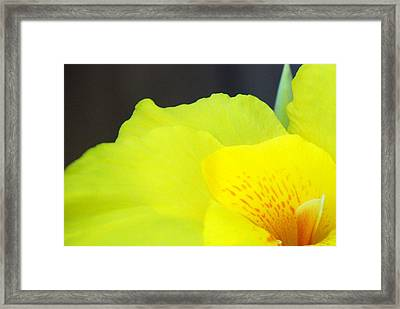 Oh Canna You See Framed Print by Diane Fiore