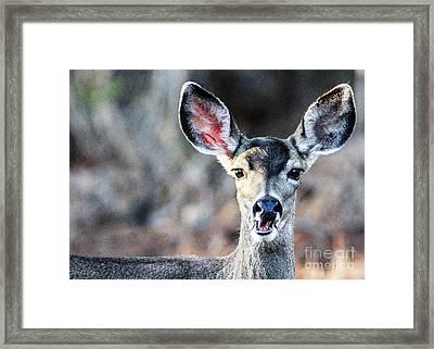 Oh, Deer Framed Print