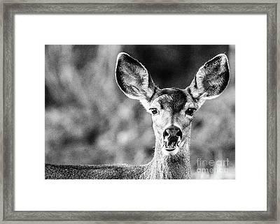 Oh, Deer, Black And White Framed Print