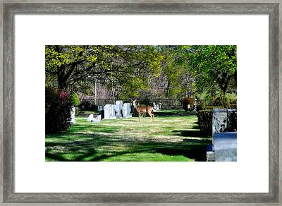 Oh Deer  Framed Print by Brynn Ditsche