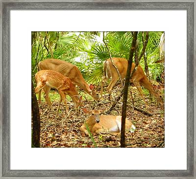 Oh Deer Four Framed Print