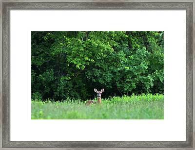 Framed Print featuring the photograph Oh Deer by Juergen Roth