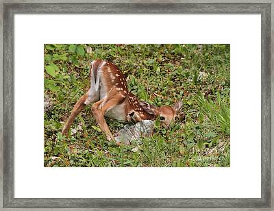 Oh Deer Little Fawn Framed Print