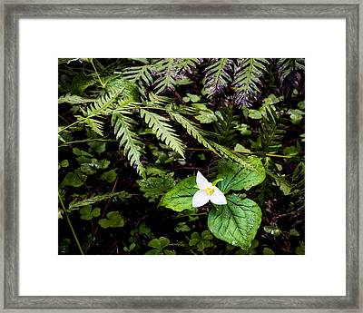 Oh I Feel Fine Framed Print by Mike McMurray