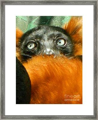 Oh My What Big Eyes You Have Framed Print by Emmy Marie Vickers