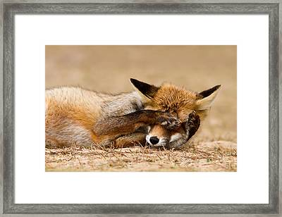 Oh No, You Didn't - Funny Fox Framed Print