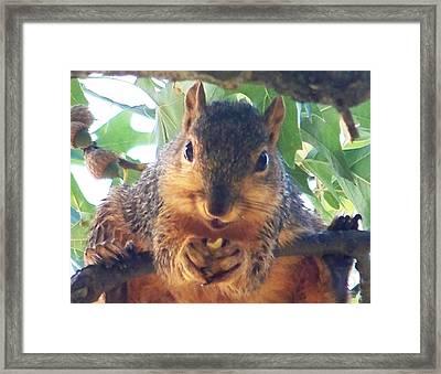 Oh Nuts Framed Print by Linda Henriksen