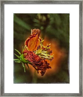 Oh Orange Juice Framed Print