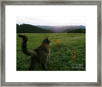 Oh What A Beautiful Day Framed Print by JoAnn SkyWatcher