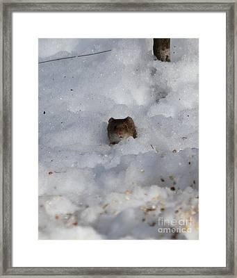 Ohhh You See Me Framed Print