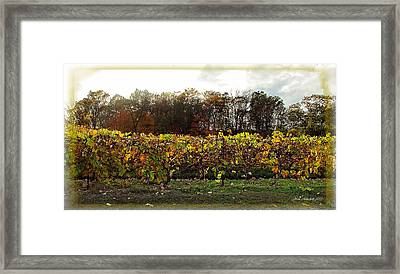 Framed Print featuring the photograph Ohio Winery In Autumn by Joan  Minchak