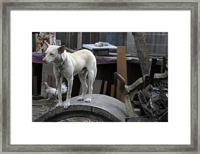 Oi Chicken I Can See You Framed Print by Jez C Self
