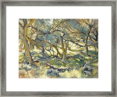 Oilve Grove Marmari Beach Framed Print