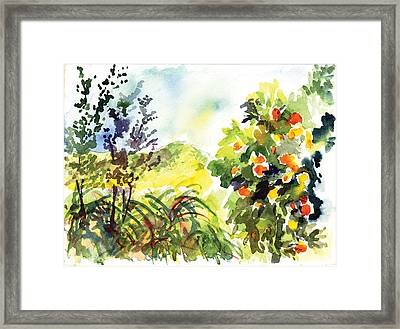 Ojai Oranges Framed Print by Lily Hymen