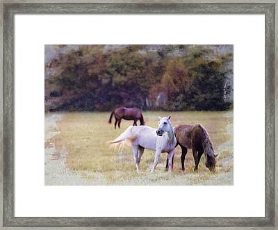 Ok Horse Ranch_1c Framed Print