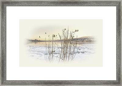 Framed Print featuring the photograph Okanagan Glod by John Poon