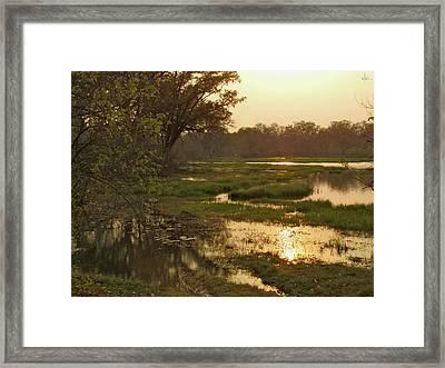 Okavango Delta Gold Framed Print