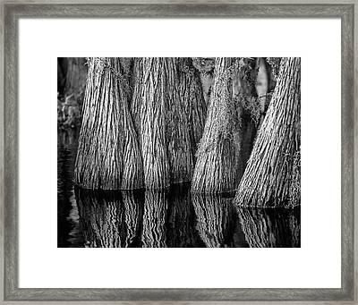 Okefenokee Cypress Framed Print
