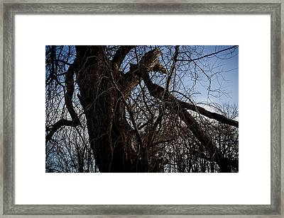 Old And Gnarly Framed Print